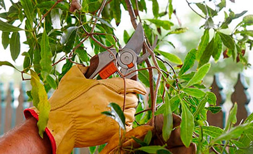 mantenimiento-de-jardines-manilva